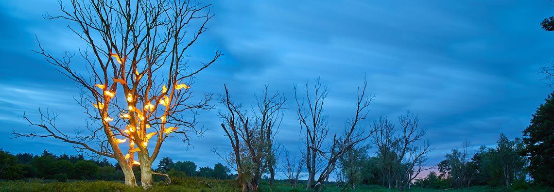 Drzewo gorejące
